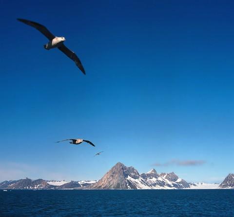 seabirds28.jpg
