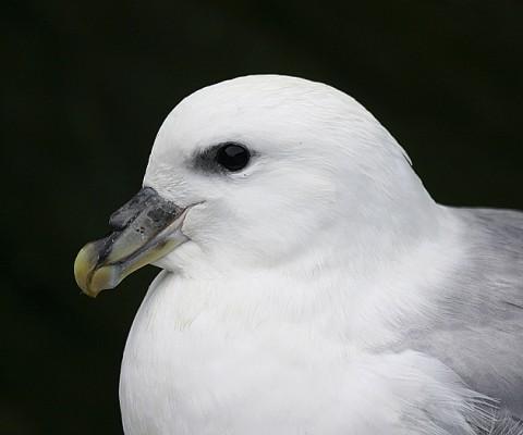 seabirds28a.jpg