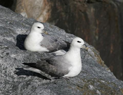 seabirds28b.jpg