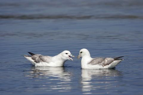 seabirds28d.jpg