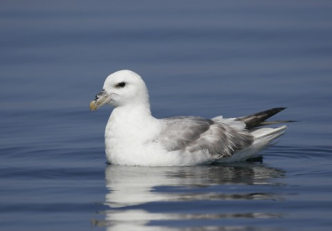 seabirds28e.jpg