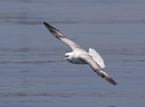 seabirds28f.jpg