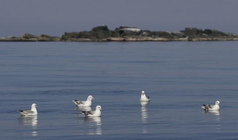 seabirds28g.jpg