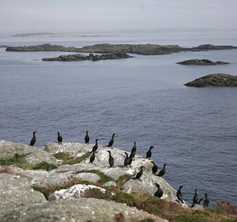 seabirds31.jpg