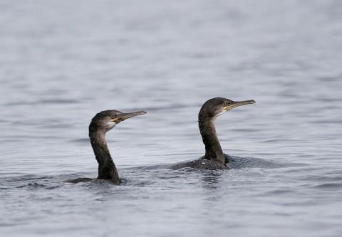 seabirds33.jpg