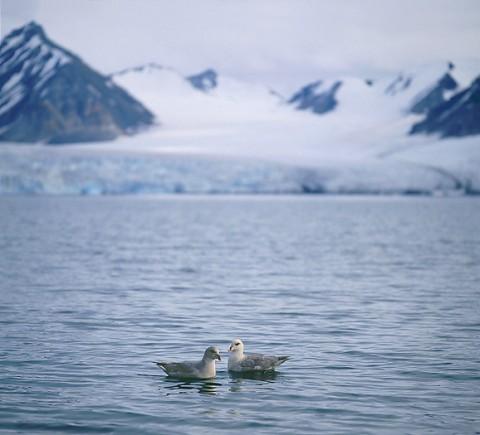 seabirds34.jpg