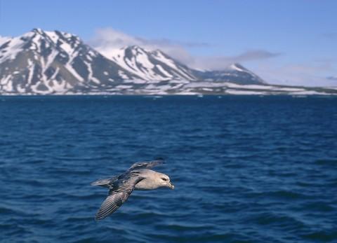 seabirds35.jpg