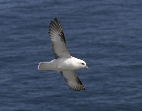 seabirds36.jpg