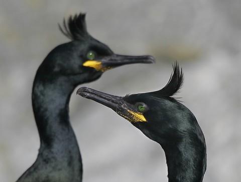seabirds38.jpg