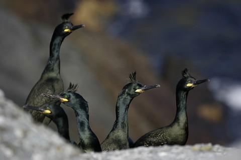 seabirds39.jpg