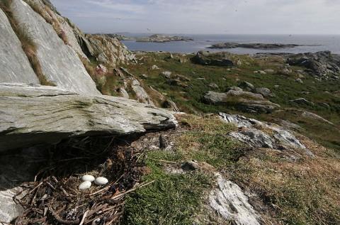 seabirds45.jpg