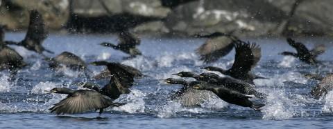seabirds46.jpg