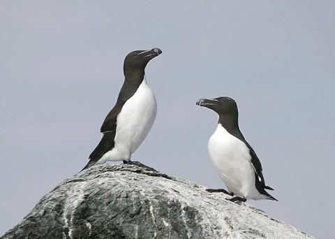 seabirds47.jpg