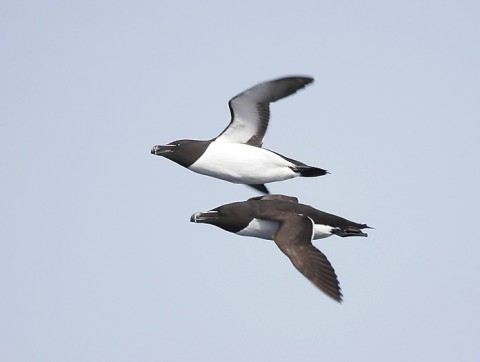 seabirds48.jpg