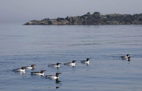 seabirds50.jpg
