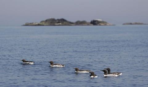 seabirds51.jpg