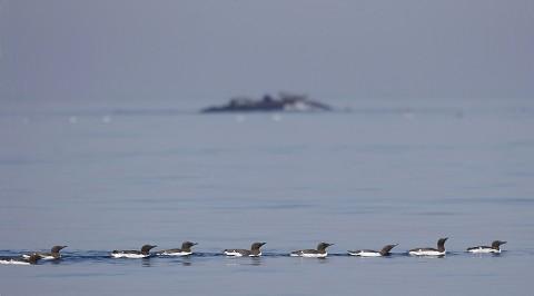 seabirds52.jpg