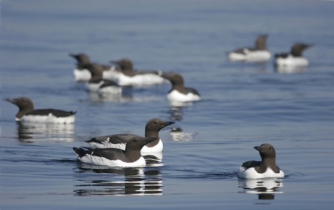 seabirds53.jpg