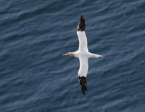 seabirds54.jpg