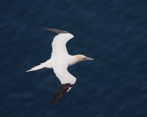 seabirds55.jpg