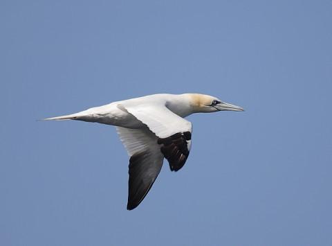 seabirds56.jpg