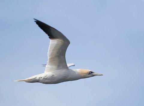 seabirds57.jpg