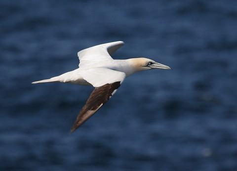 seabirds58.jpg