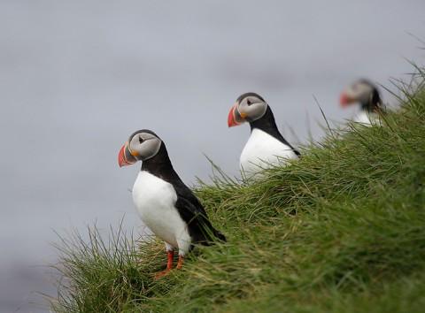 seabirds59.jpg
