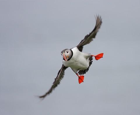 seabirds60.jpg