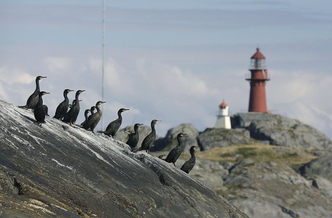 seabirds61.jpg