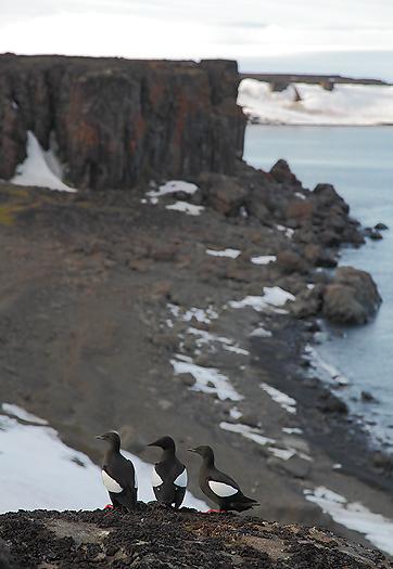 seabirds63.jpg