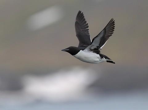 seabirds66.JPG