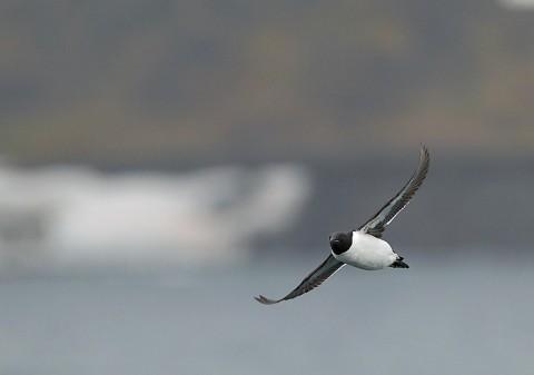 seabirds67.JPG