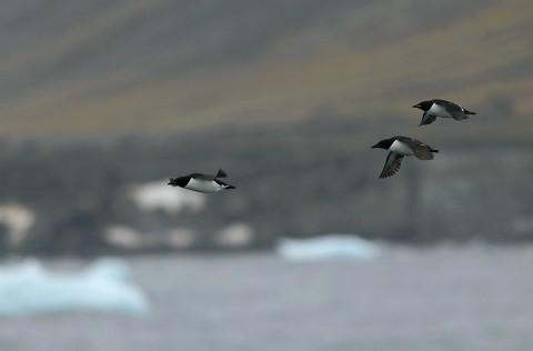seabirds68.JPG