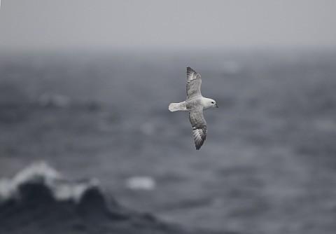 seabirds69.jpg
