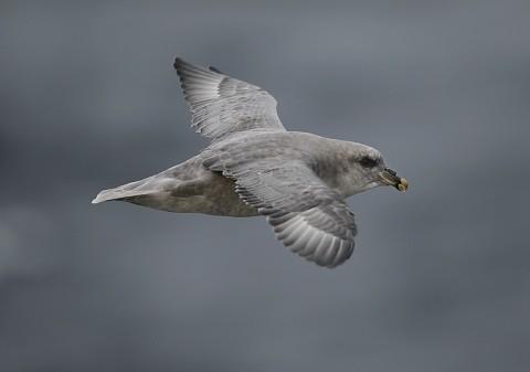 seabirds71.jpg