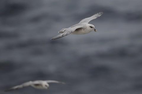 seabirds72.jpg