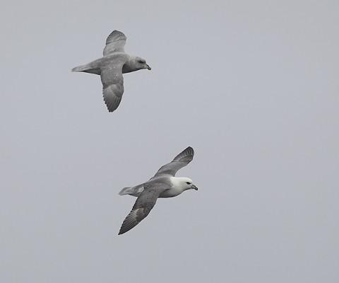 seabirds73.jpg