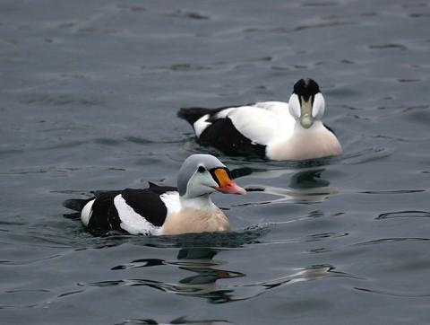 ducks22.jpg