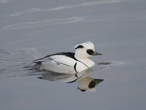 ducks26.jpg