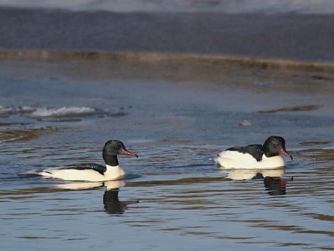 ducks29.jpg
