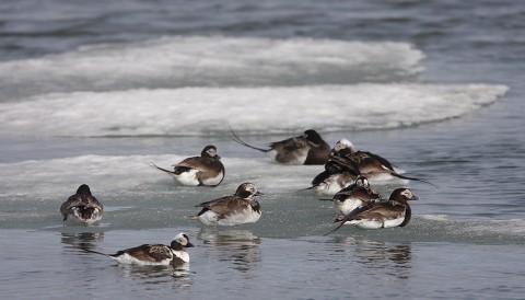 ducks44.jpg