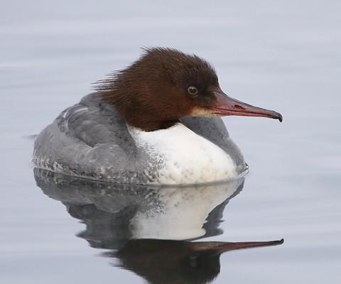 ducks55.jpg