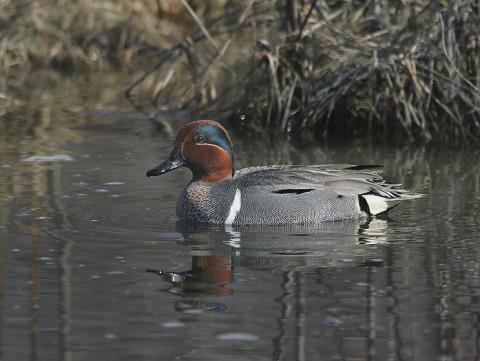 ducks61.jpg