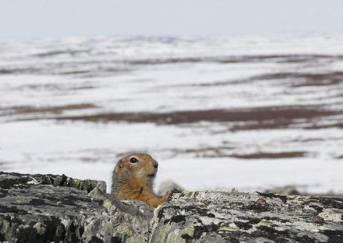 groundsquirrel21.jpg