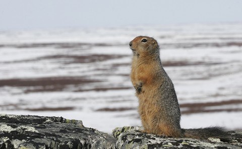 groundsquirrel22.jpg