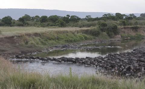 kenya-antelopes-021.jpg