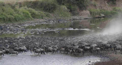 kenya-antelopes-022.jpg