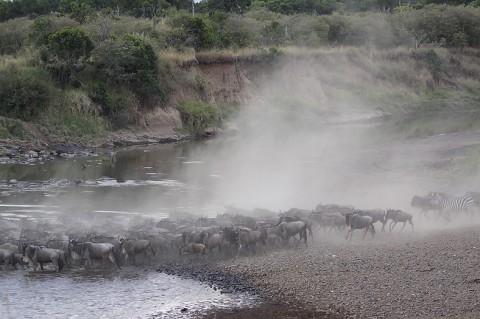 kenya-antelopes-023.jpg