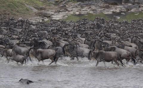 kenya-antelopes-024.jpg